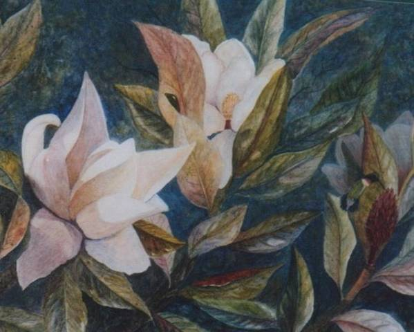 Magnolias; Humming Bird Poster featuring the painting Serenity by Ben Kiger