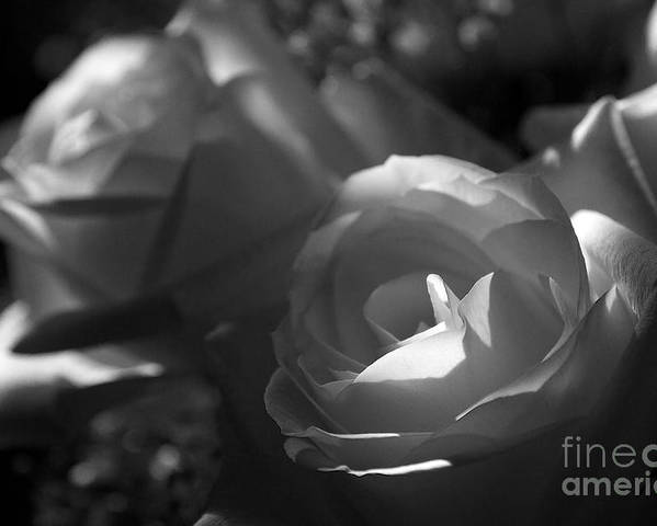 Flowers Poster featuring the photograph Shades Of Grey In Rose by Cheryl Hurtak