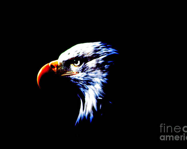 Eagle Poster featuring the photograph Shadow Eagle by Nick Gustafson