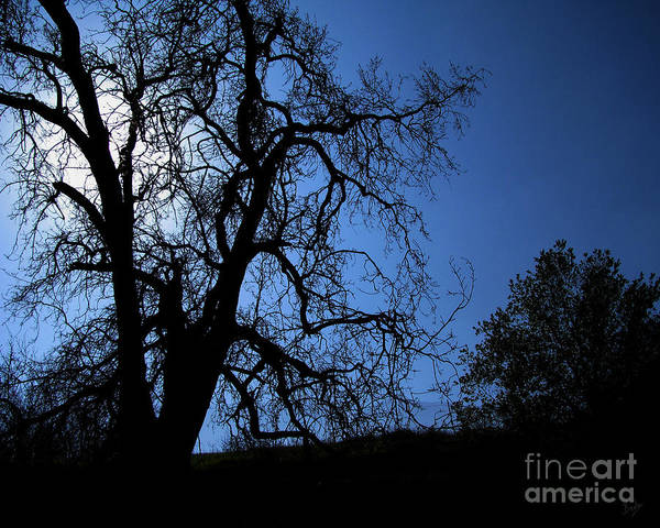 Nature Poster featuring the photograph Shadowlands 1 by Peter Awax