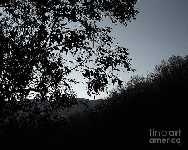 Nature Poster featuring the photograph Shadowlands 2 by Peter Awax