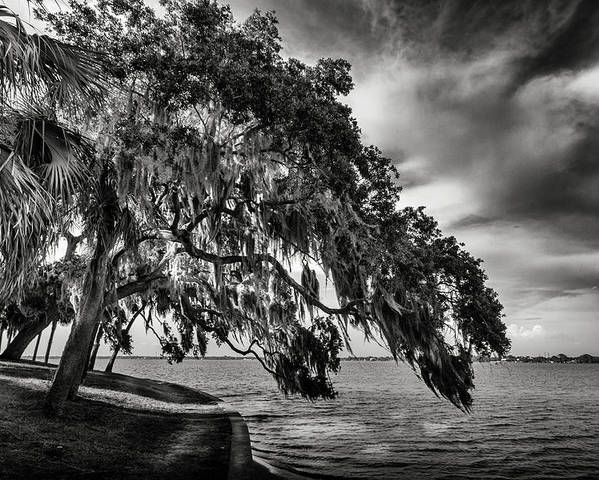 Oak Trees Poster featuring the photograph Shady Oak by Marvin Spates