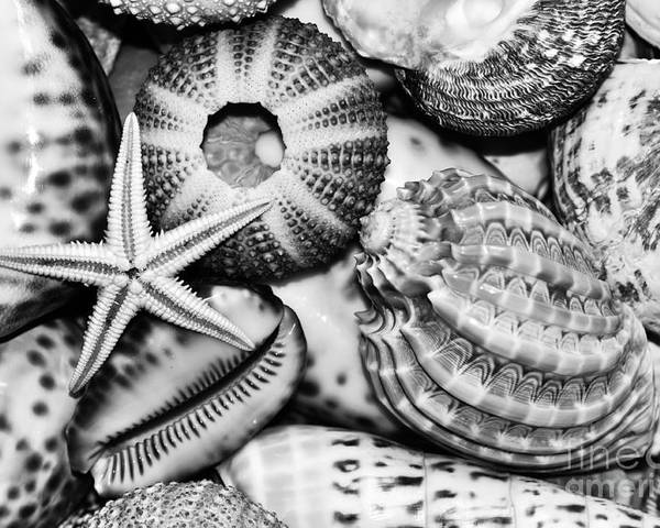 Photography Poster featuring the photograph Shellscape In Monochrome by Kaye Menner