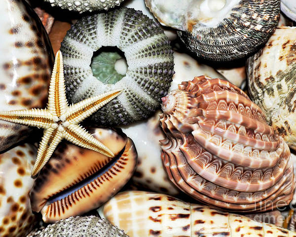 Photography Poster featuring the photograph Shellscape by Kaye Menner
