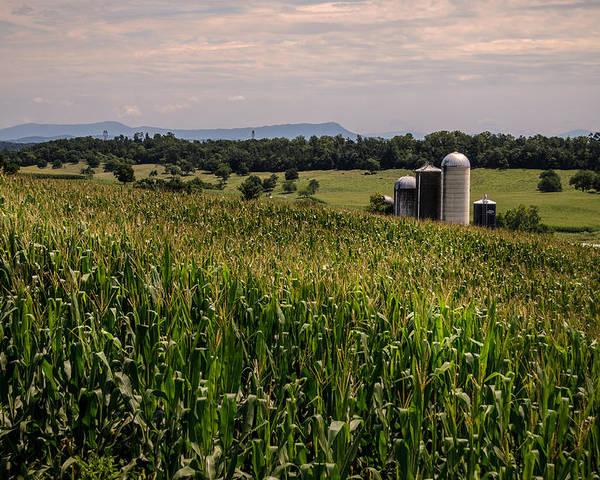Shenandoah Valley Poster featuring the photograph Shenandoah Corn by Pat Scanlon