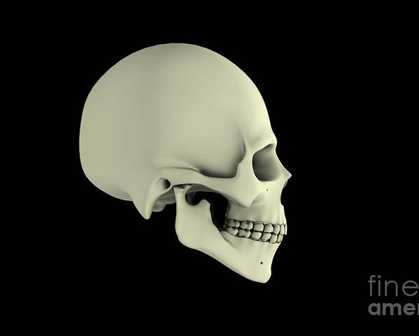 Horizontal Poster featuring the digital art Side View Of Human Skull by Stocktrek Images