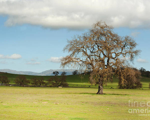 Landscape Photography Poster featuring the photograph Silicon Valley Hills by Artist and Photographer Laura Wrede