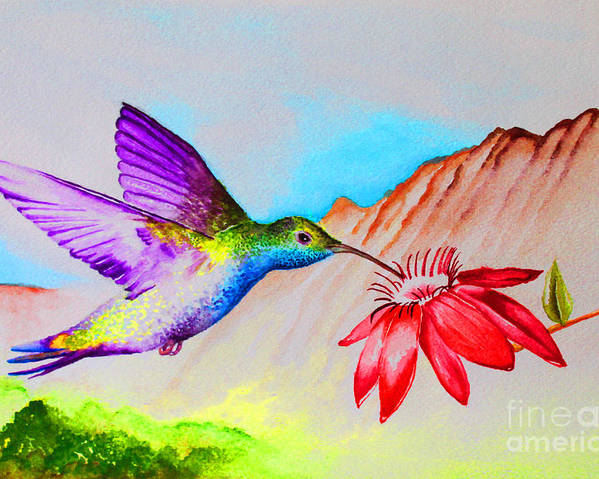 Hummingbird Poster featuring the painting Sipping Sweet Contemporary by Jerome Wilson
