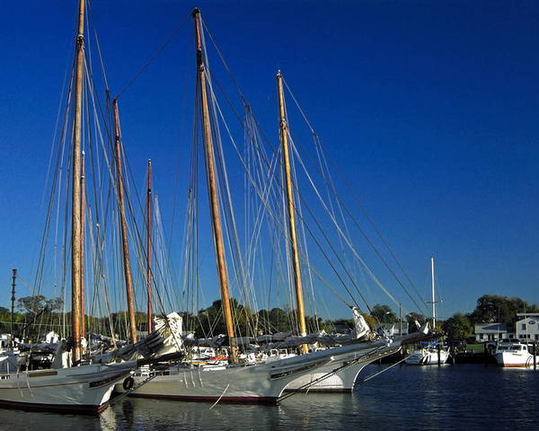 Skipjack Sailboats Docked Poster featuring the photograph Skipjacks by Sally Weigand