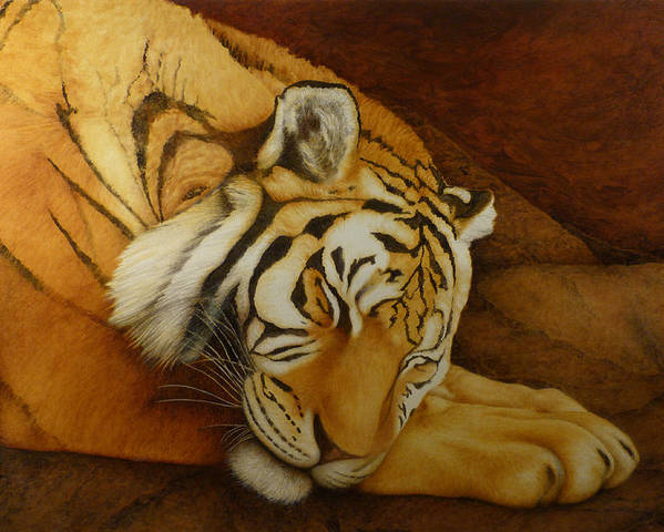 Tiger Poster featuring the painting Sleeping Tiger by Norm Holmberg