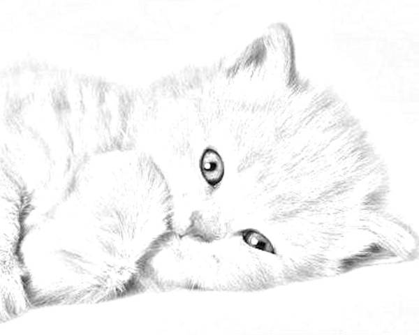 Animal Poster featuring the photograph Sleepy Kitty by J D Owen