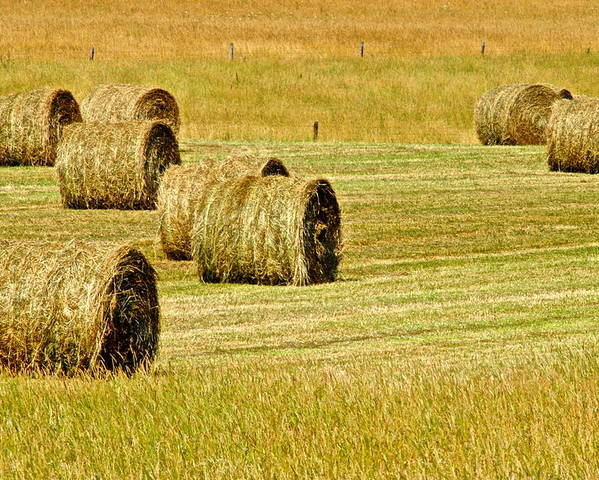 Landscape Poster featuring the photograph Smoky Mountain Hay by Frozen in Time Fine Art Photography