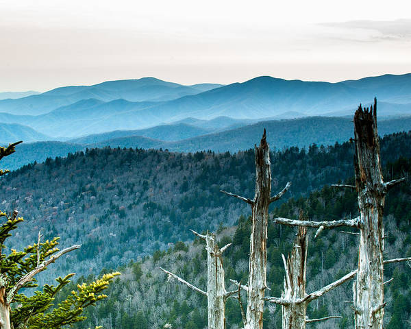 Trees Poster featuring the photograph Smoky Mountain Overlook by Paul Johnson