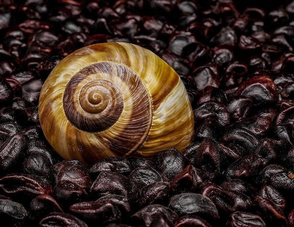 Snail Poster featuring the photograph Snailshell In Tamarind Bed by Tom Kolossa