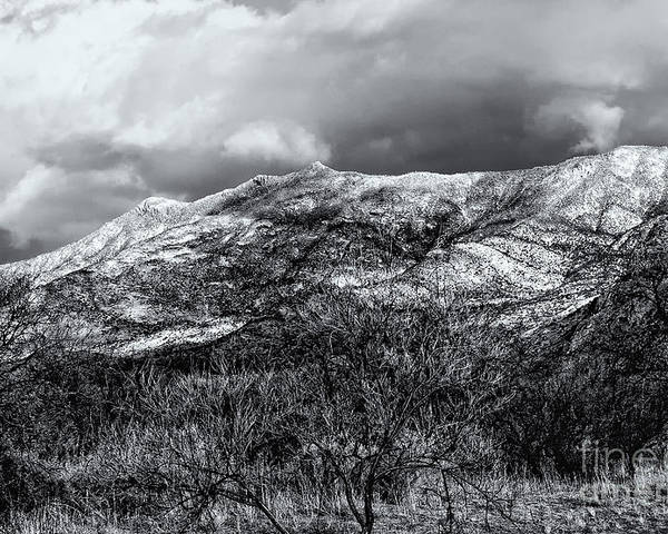 2010 Poster featuring the photograph Snow Capped 45 by Mark Myhaver