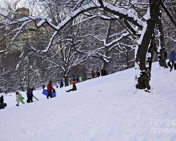 Owboards Poster featuring the photograph Snow Day In The Park by Madeline Ellis