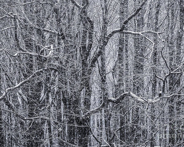 Snow Poster featuring the photograph Snow In The Forest by Diane Diederich