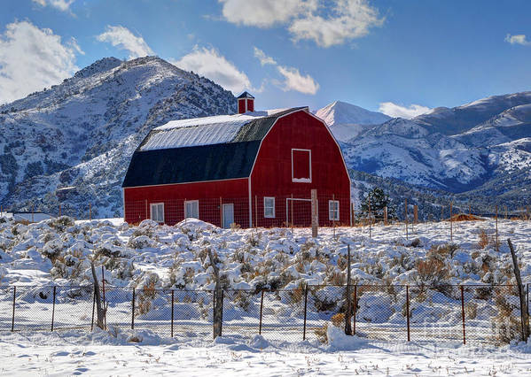 Utah Poster featuring the photograph Snowy Barn In The Mountains - Utah by Gary Whitton
