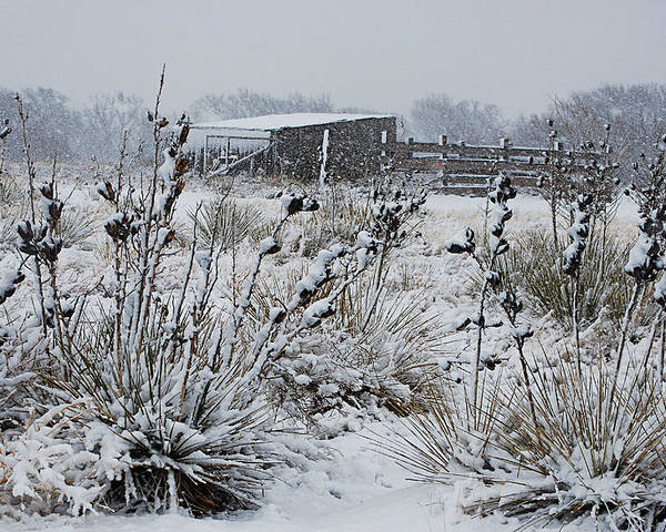 Snow Poster featuring the photograph Snowy Pasture by Melany Sarafis