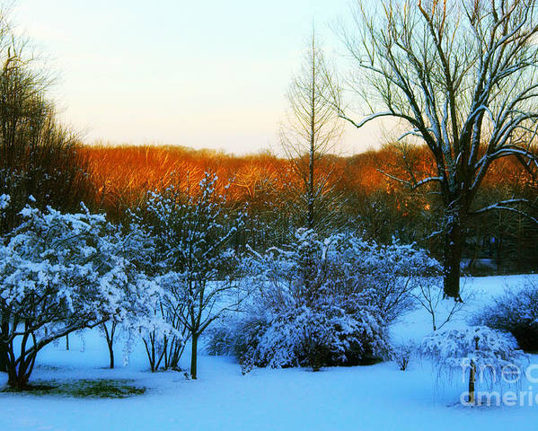 Snow Poster featuring the photograph Snowy Trees In December Twilight - Pearl S. Buck Homestead by Anna Lisa Yoder