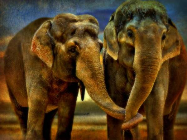 Elephants Poster featuring the mixed media So In Love by Wendie Busig-Kohn