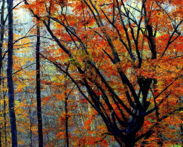 Autumn Poster featuring the photograph Song Of Autumn by Karen Wiles