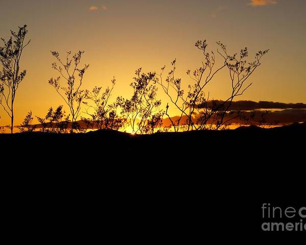 American Poster featuring the photograph Sonoran Desert Sunset by Kerri Mortenson