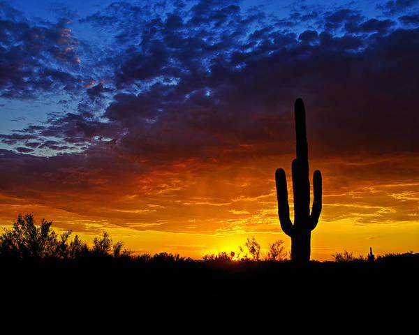 Sunset Poster featuring the photograph Sonoran Style Sunset by Saija Lehtonen