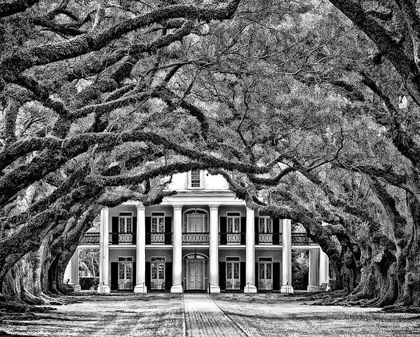 Oak Alley Plantation Poster featuring the photograph Southern Class Monochrome by Steve Harrington