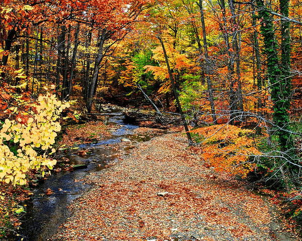 Autumn Poster featuring the photograph Spectrum Of Color by Frozen in Time Fine Art Photography
