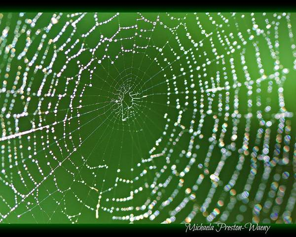 Water Poster featuring the photograph Spider Web by Michaela Preston