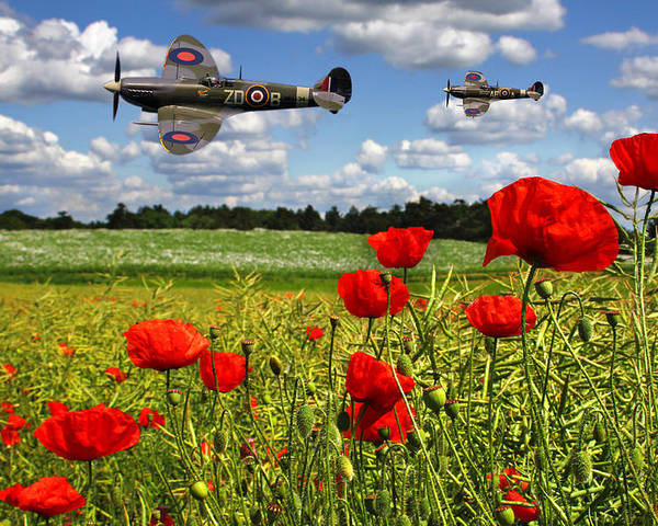 Raf Poster featuring the photograph Spitfires And Poppy Field by Ken Brannen
