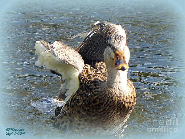 Duck Poster featuring the photograph Splish Splash by Rennae Christman