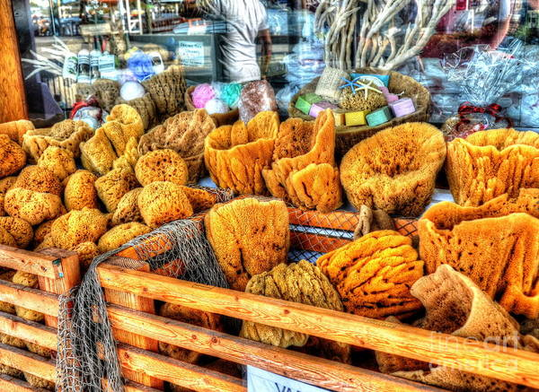 Sponges Poster featuring the photograph Sponge Worthy by Debbi Granruth