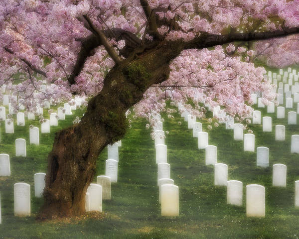 America Poster featuring the photograph Spring Arives At Arlington National Cemetery by Susan Candelario
