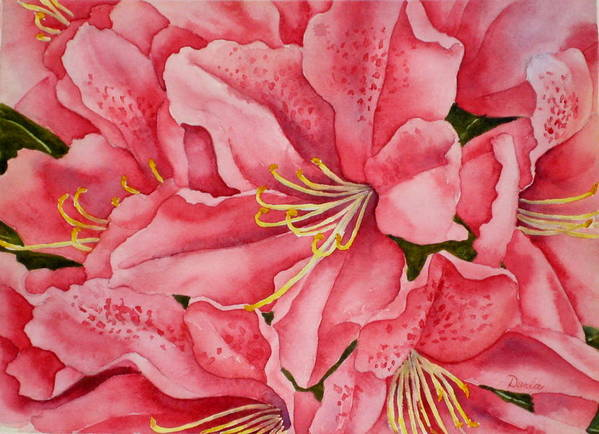 Watercolor Poster featuring the painting Spring Azalea by Darla Brock