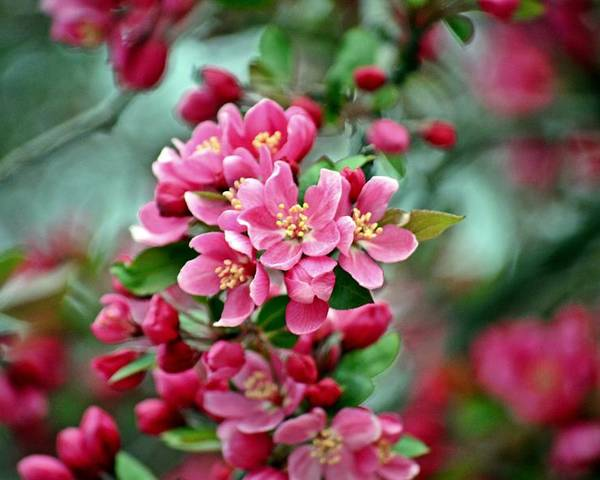 Spring Poster featuring the photograph Spring Bokeh by David Earl Johnson