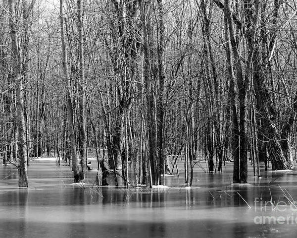 Nature Poster featuring the photograph Spring Flooding by Sophie Vigneault