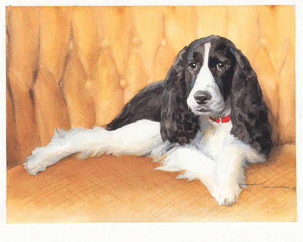 <a Href=http://miketheuer.com Target =_blank>www.miketheuer.com</a> Springer Spaniel Watercolor Portrait Poster featuring the drawing Springer Spaniel Watercolor Portrait by Mike Theuer