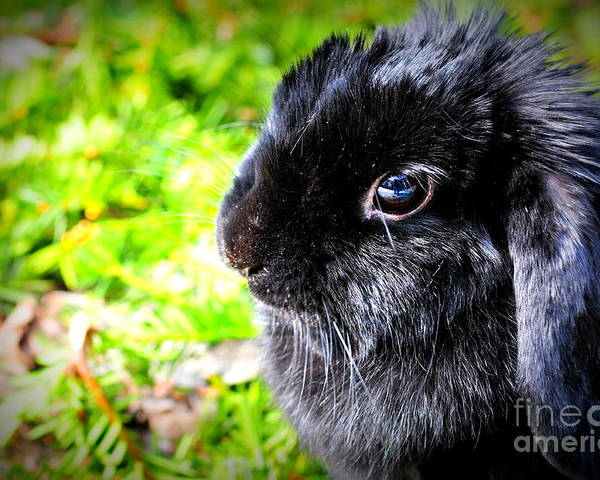 Spring Poster featuring the photograph Springtime Bunny by Sophia Elisseeva