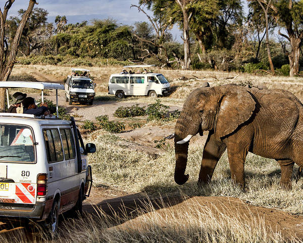 Elephant Poster featuring the photograph Stand Off by Wendy White
