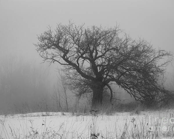 Tree In Fog Poster featuring the photograph Standing Alone by Alana Ranney