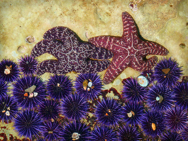 Scenic Poster featuring the photograph Starfish Dance by Karey and David Photography