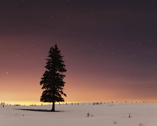 Canada Poster featuring the photograph Stars In The Night Sky With Lone Tree by Susan Dykstra