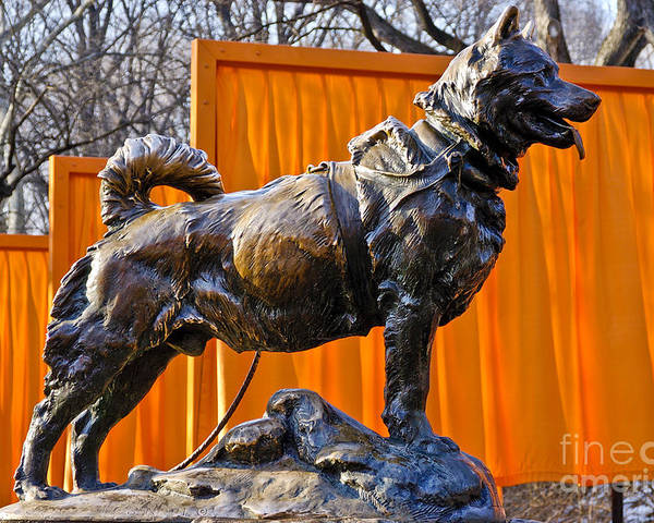 Ew York City Poster featuring the photograph Statue Of Balto In Nyc Central Park by Anthony Sacco