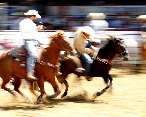 Horse Poster featuring the photograph Steer Wrestling by Bill Keiran