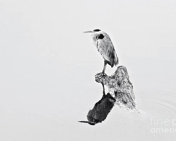 Great Blue Heron Poster featuring the photograph Still Hunter by Scott Pellegrin