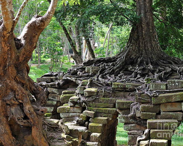 Angkor Poster featuring the photograph Strangler Fig Tree Roots On Preah Khan Temple by Sami Sarkis
