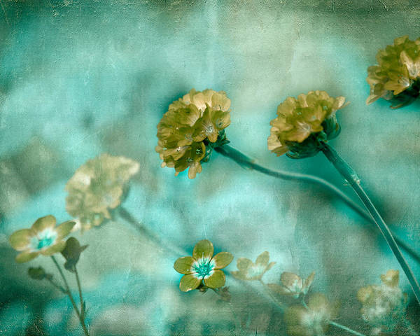 Flowers Poster featuring the photograph Stretching Toward Morning by Bonnie Bruno