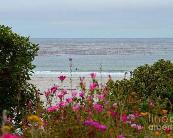 Ocean Poster featuring the photograph Summer At Carmel by Shauna Fackler